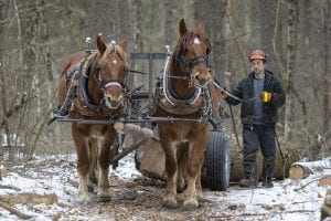 Horse Logging in Willsboro