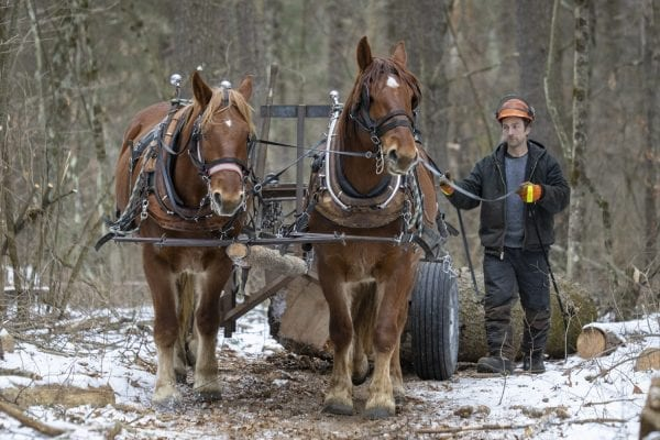 "Chad Vogel of Reber Rock Farm uses a pair of draft horses to harvest timber in Willsboro in January. Horse logging, Vogel told the Explorer, ""is a great solution for conserving the land while still producing the forest products we all need."" His carbon footprint is represented by a can of gas for his saw, and a couple bottles of bar and chain oil. And the difference in woodlots that have been logged and those that have not can be difficult to tell. The trees to be harvested have been carefully selected, and since immediate profit and efficiency are not the primary goals, Vogel removes less desirable trees first, letting high-quality trees size up for future logging, while opening the canopy for smaller hardwoods that will pop when given light and space. See the full story by Tim Rowland in the March issue of the Explorer. Photo by Mike Lynch"