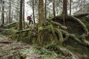 The Adirondacks: A bushwhacker's paradise