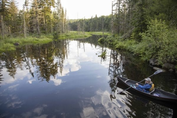 Adirondack birding guide Joan Collins paddles Fishing Brook in July 2019. Photo by Mike Lynch