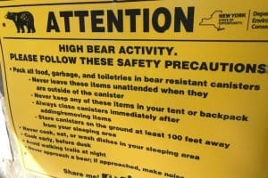 State captures bear that raided Lake Colden campsites