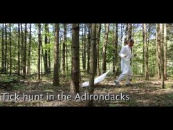 Hunting for ticks in the Adirondacks