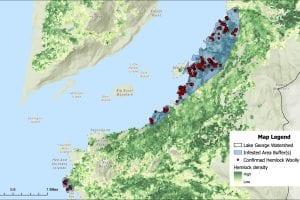 Satellites could help spot hemlock woolly adelgid on Lake George