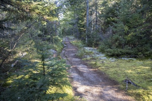 The first section of trail is mostly flat as it goes through the forest. Photo by Mike Lynch