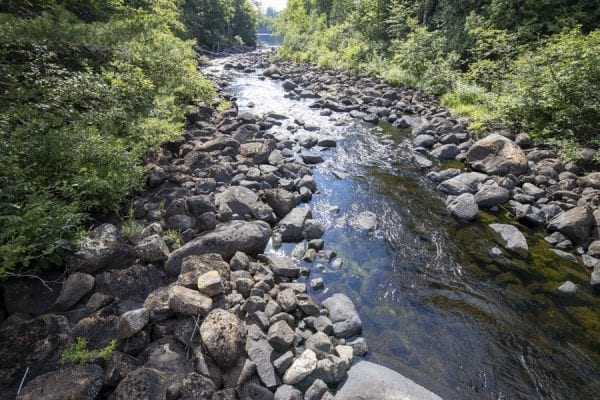 A stream that runs through the Newcomb AIC property. Photo by Mike Lynch