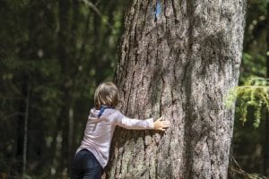 Forest bathing: A cure for what ails