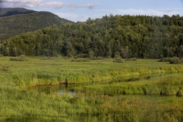 Wetlands alongside the Saranac River outside the village of Saranac Lake. Photo by Benjamin Chambers