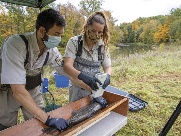 Biological science technician Shelby Scarfo, right,  and fish biologist Jonah L. Withers, both of the U.S. Fish and Wildlife Service, perform tests on an Atlantic salmon from the  Boquet River. Photo by Mike Lynch
