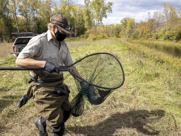 U.S. Fish and Wildlife Service technician Bryan Ross carries a salmon to the Boquet to be released. Photo by Mike Lynch