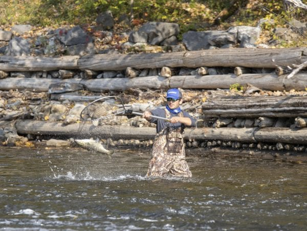 Caleb Hill nets a salmon for a fellow angler on the Boquet River. Photo by Mike Lynch