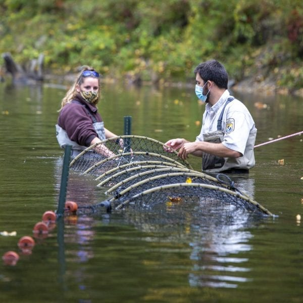 U.S. Fish and Wildlife Staff check their net on the Boquet River for salmon. Photo by Mike Lynch