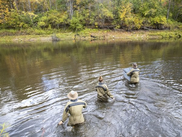 U.S. Fish and Wildlife Service staff cross the Boquet River to check the net for salmon. Photo by Mike Lynch