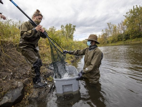 U.S. Fish and Wildlife Service staff prepare to release a salmon back into the Boquet River. Photo by Mike Lynch