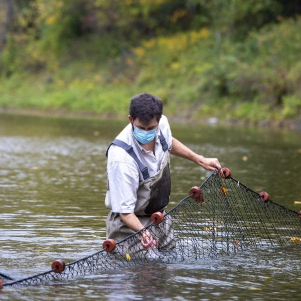 U.S. Fish and Wildlife Service Scientist Jonah Withers cleans a fish net strewn across the Boquet River in September. Photo by Mike Lynch