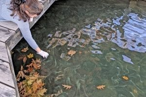 State experts warn about harmful algal blooms on Lake George