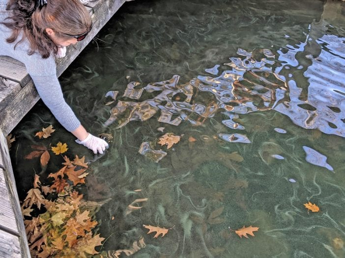 Cyanobacteria in Lake George