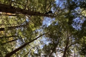 NY advisory group considers forest role in fighting climate change