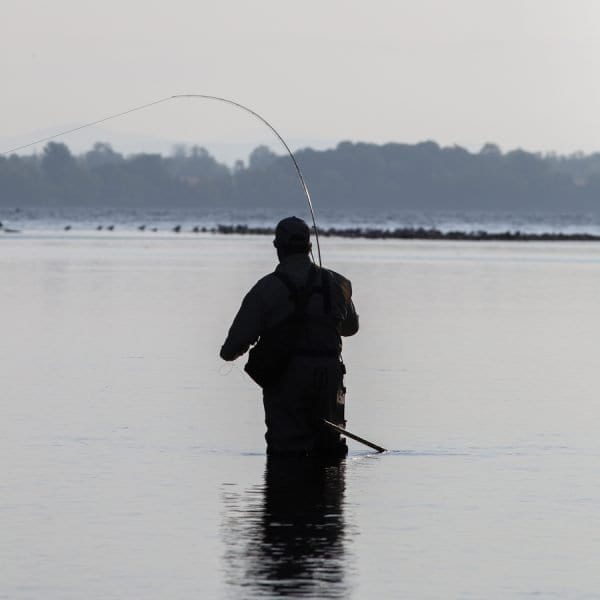 An angler lands a fall fish. Photo by Mike Lynch