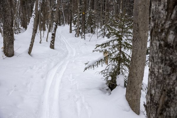 Fresh tracks through the new snow. Photo by Mike Lynch