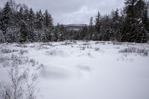 A meadow along the trail in the Jessup River Wild Forest. Photo by Mike Lynch
