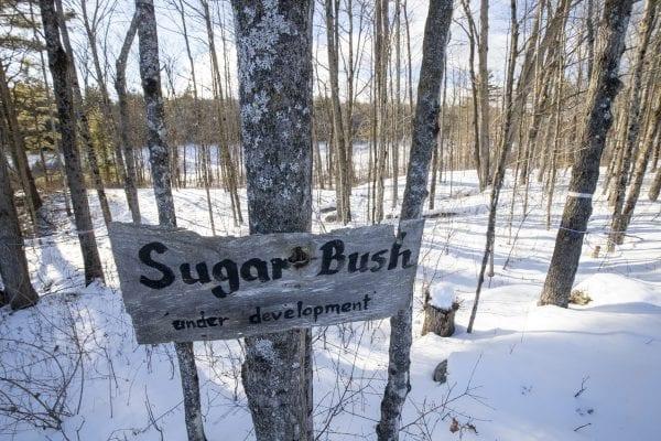 The sugar bush at Dacy Meadow Farm. Photo by Mike Lynch