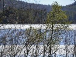 woodward lake