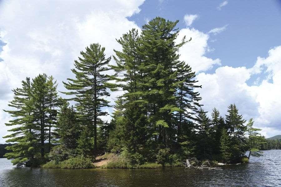 island on St Regis Pond