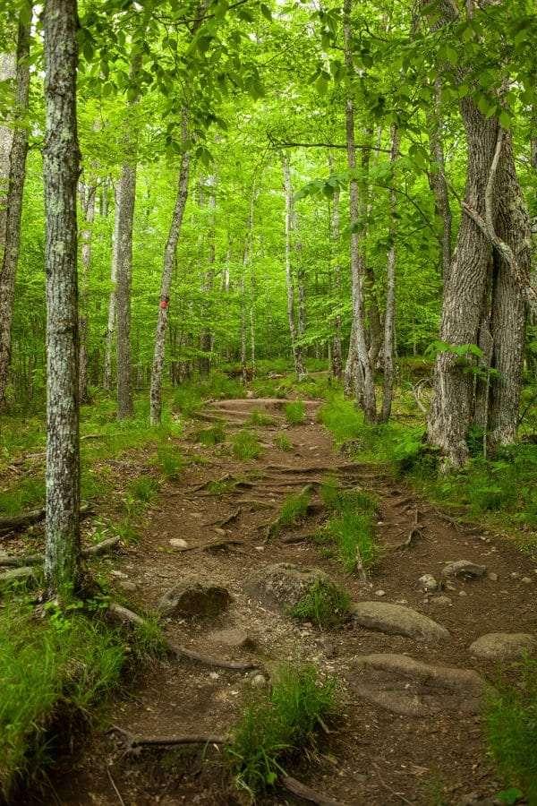 Baker Mountain Trail.