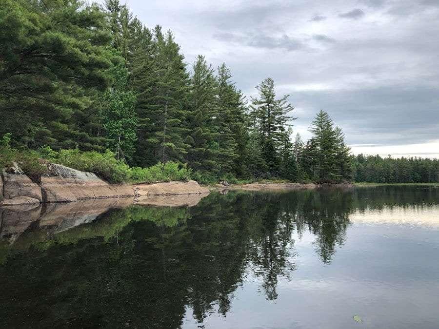 bog river shoreline