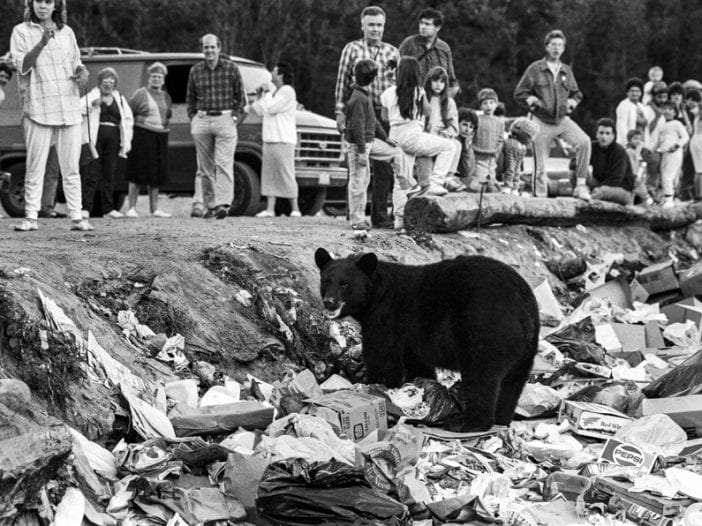 bear at dump