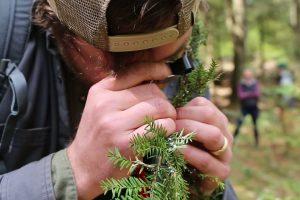NY unleashes predator bugs to eat hemlock pests