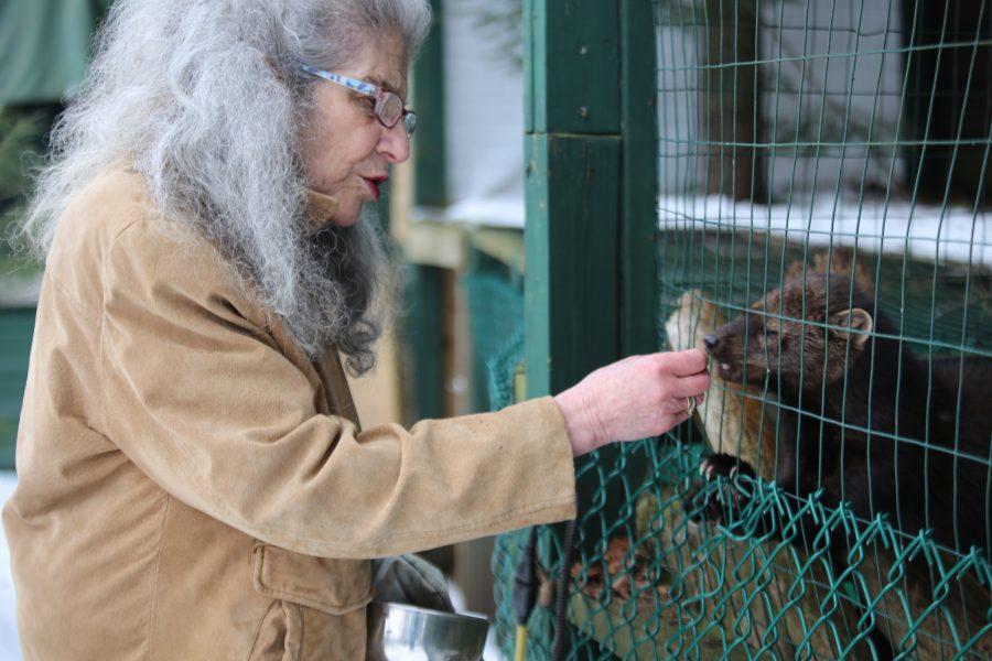 Wendy Hall co-founder of Adirondack Wildlife Refuge