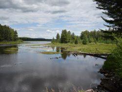 grasse river flow