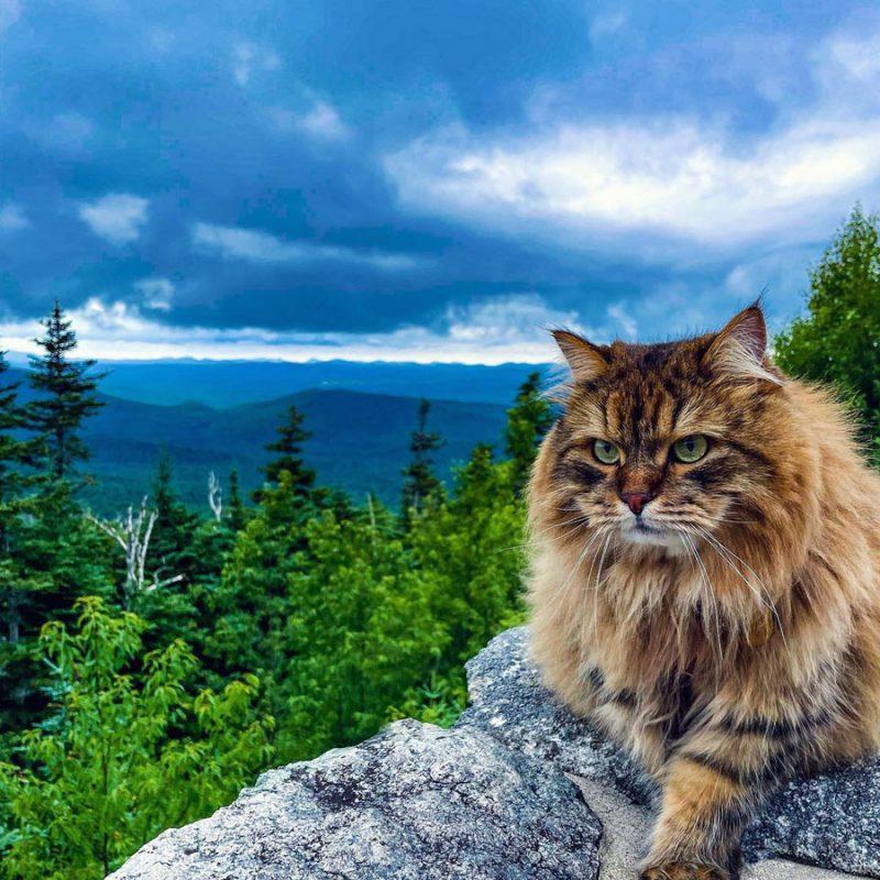 hiking cat