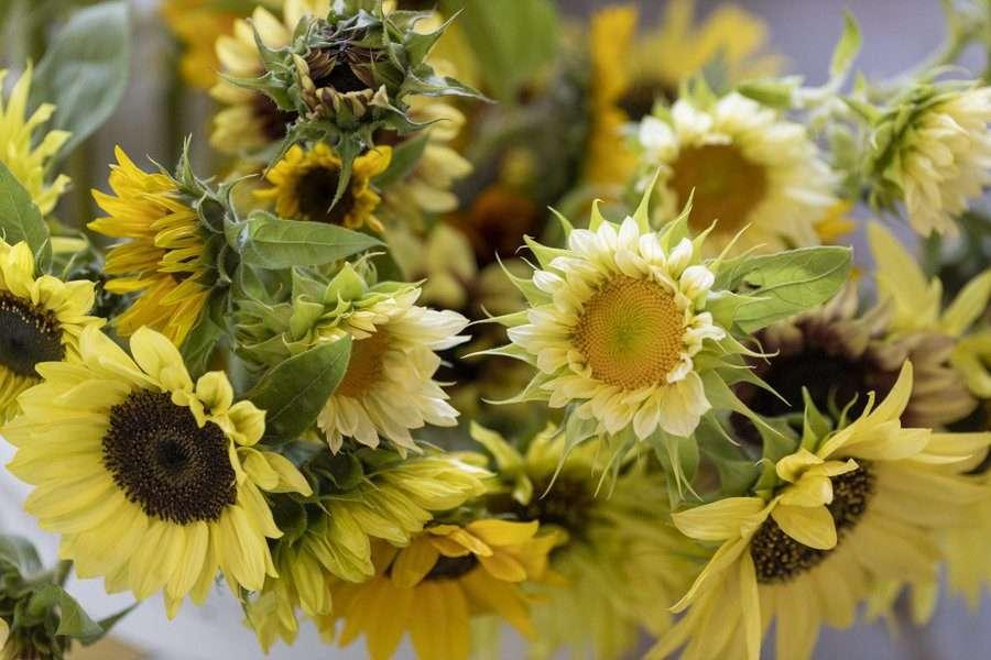 Flowers from Sunwarm Gardens