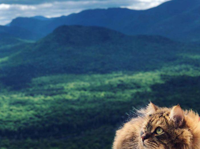 cat hiker