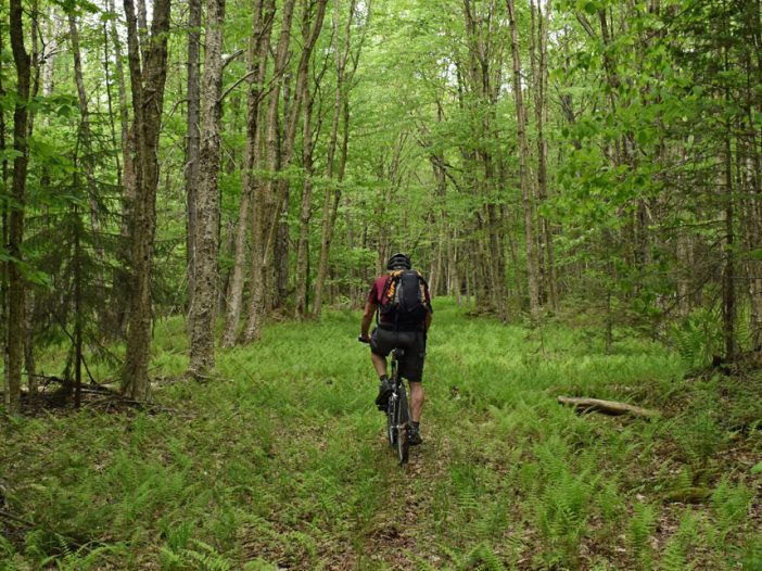 Woods biking to county line monument